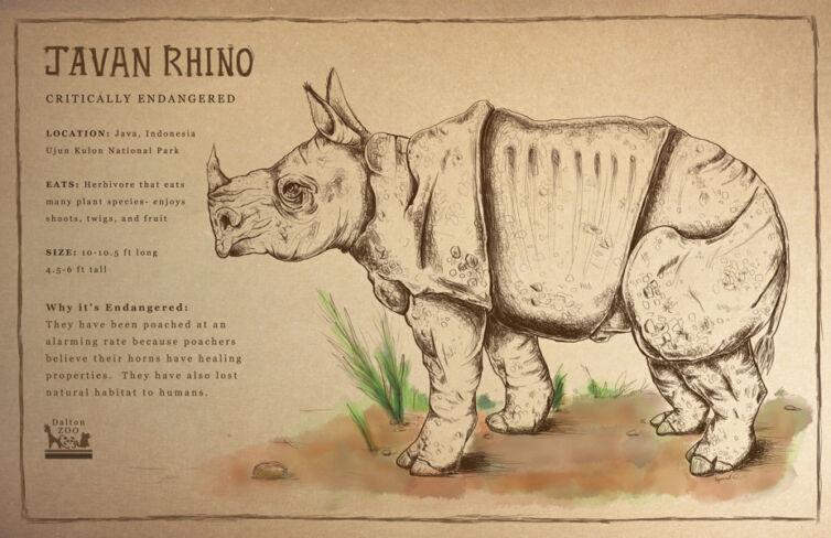 Javan Rhino Zoo Placard