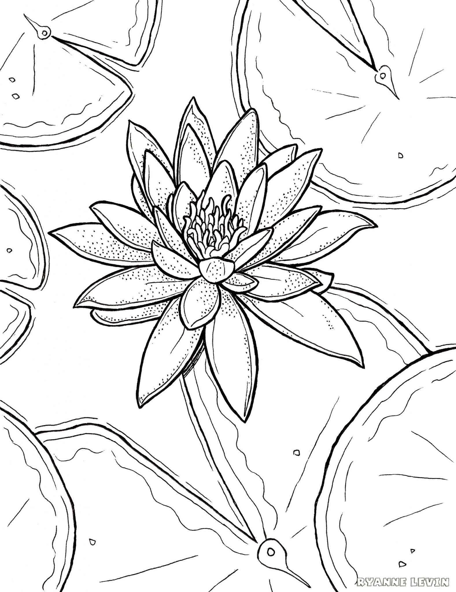 Lily Coloring Pages Free Printable Water Lily Coloring Page Download  Ryanne Levin