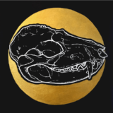raccoon skull ryanne levin art
