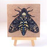 deaths-head-moth-on-sandstone-ryanne-levin-art