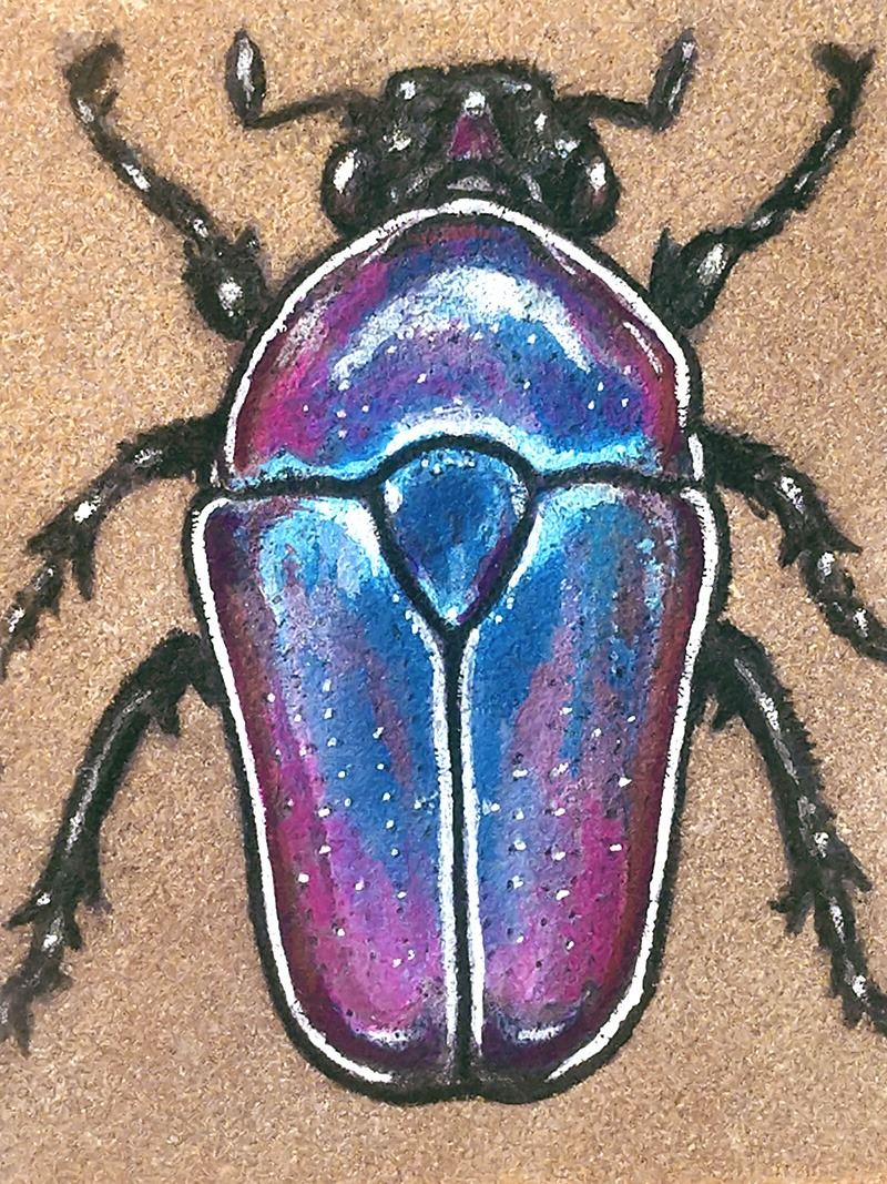 Flower Beetle on Sandstone