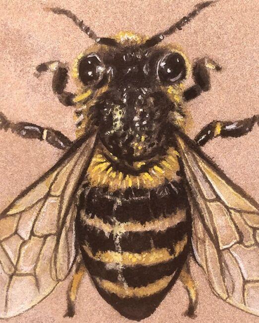 honey-bee-on-sandstone-detail-ryanne-levin-art