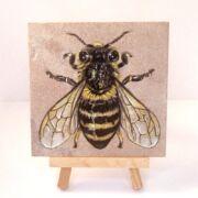 Honey Bee on Sandstone