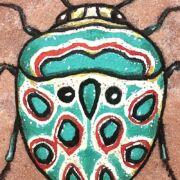 Picasso Bug on Sandstone